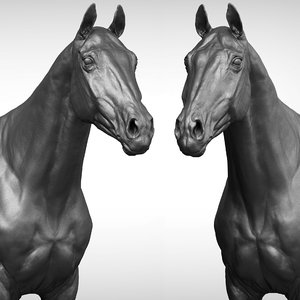 horse thoroughbred 3D model