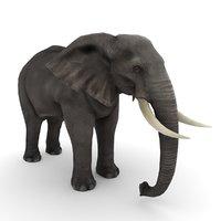 3D african elephant model