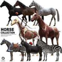Horse Collection (Rigged)
