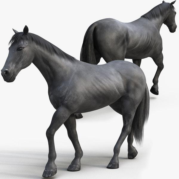 horse pro black animations 3D model