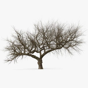old winter tree 3D model