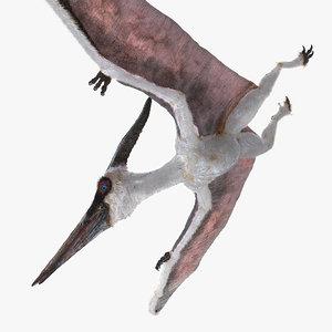 3D pterosaur pteranodon white flying