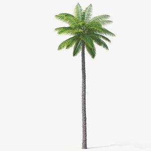 palm 02 3D model