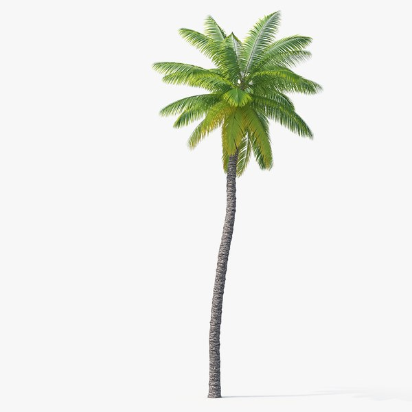 palm 01 model