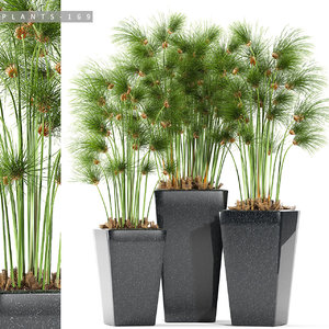 plant 169 model