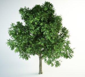 red oak 3D