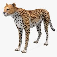 3D cheetah african feline