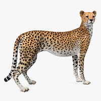 3D cheetah looking model