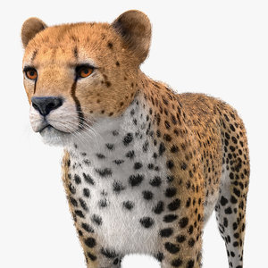 3D cheetah fur model
