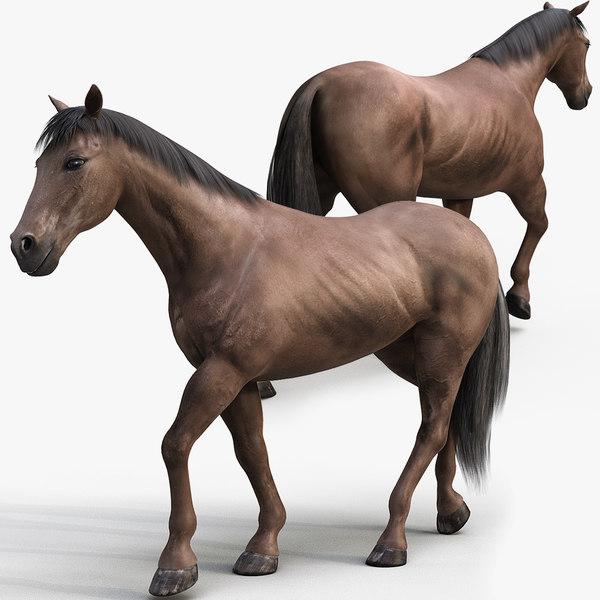 horse pro dark brown 3D model