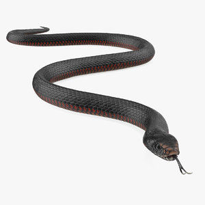 3D model california kingsnake crawling pose
