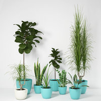 Collection plant 01