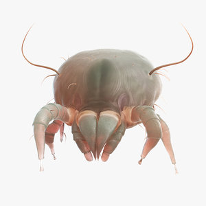 dust mite animation model