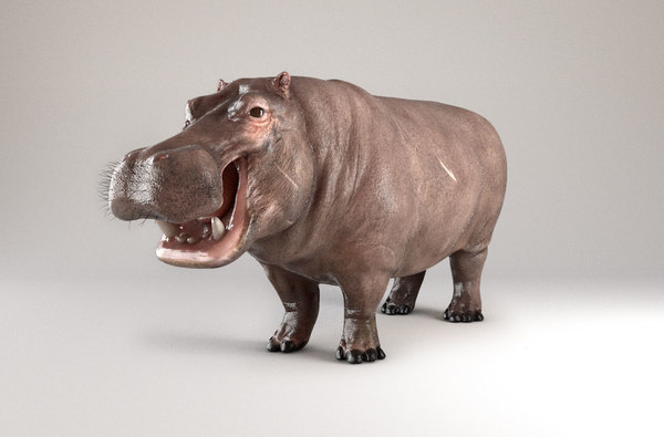 3D hippopotamus hippotamus model