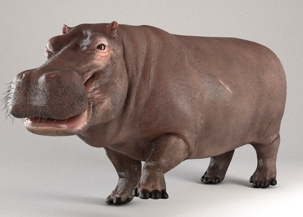 3D hippopotamus hippo rigged