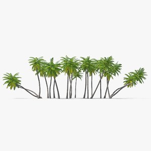 3D palm set tree