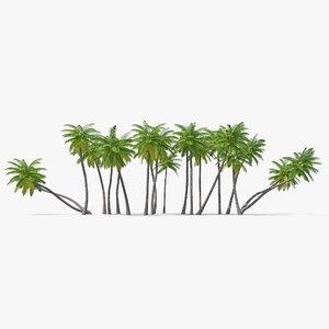 3D palm set tree