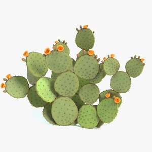 prickly pear cactus 3D model