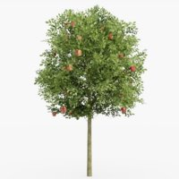 3D model apple tree 02