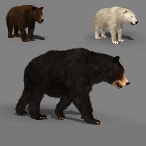 3D wild bear pack animation