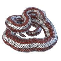 rigged rosy boa reptile 3D