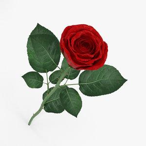 rose rosa flowers 3D model