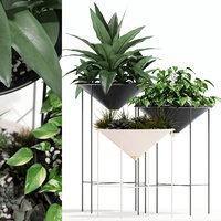 3D model plants 141 artica
