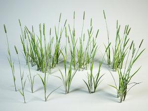 3D model grass bushes