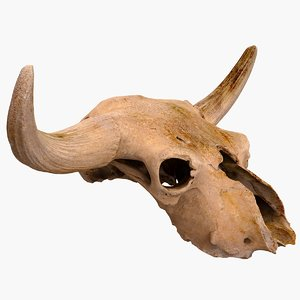scan real skull bison 3D model