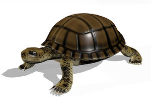 3D rigged tortoise turtle animation
