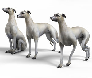 3D rigged whippet dog