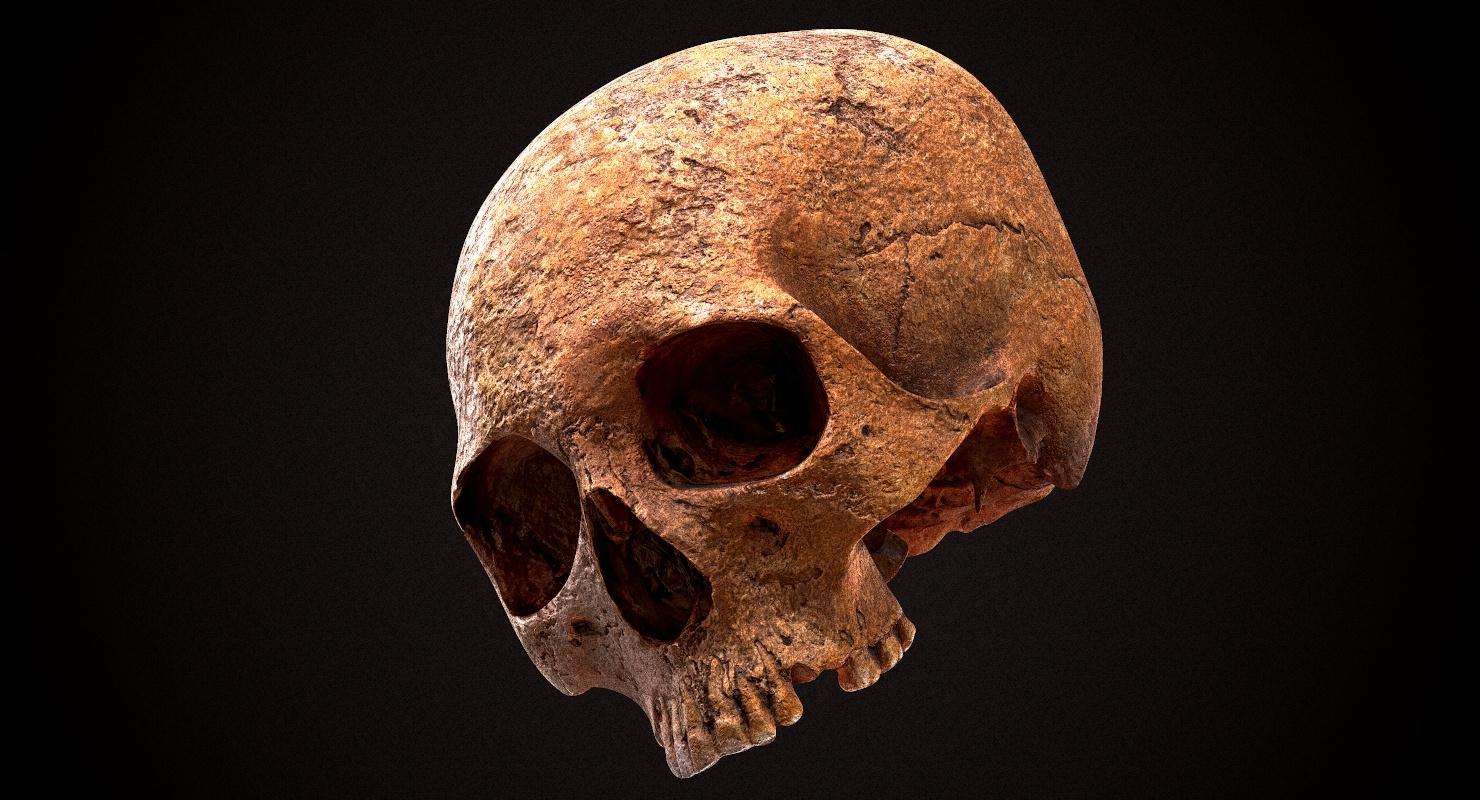3D real skull
