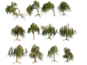 3D weeping willow hd pack