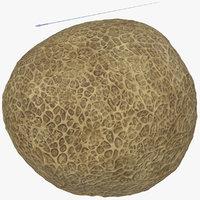fertilization rigged 3D model