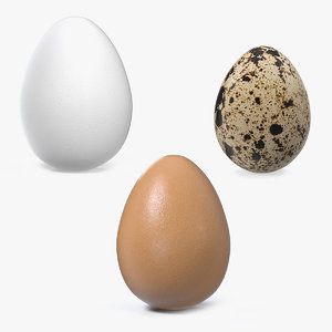 3D model eggs brown chicken