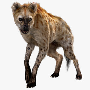 hyena rigged fur 3D model