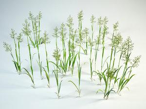 grass bushes 3D model