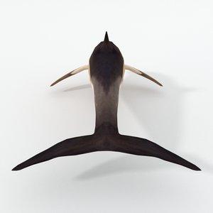dolphin listed 3D