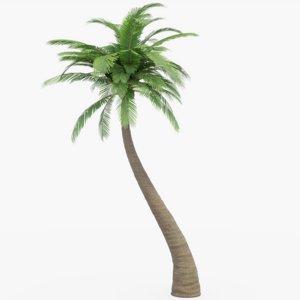 palm pbr 3D model