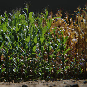 corn plants 15 types 3D model