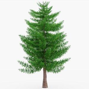 3D evergreen tree model