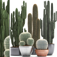 plants exotic cactus saguaro model