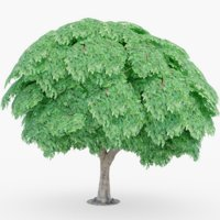 3D fig tree