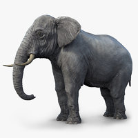 3d elephant realistic arnold
