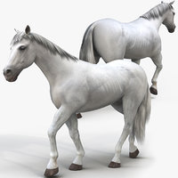 white horse animations 3D model