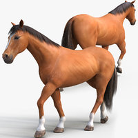 3D brown horse rig