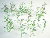 3D tufted vetch grass