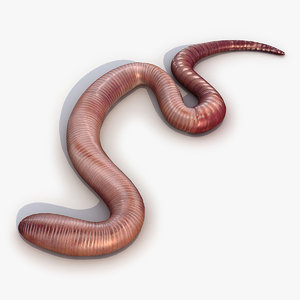 earth worm 3d model