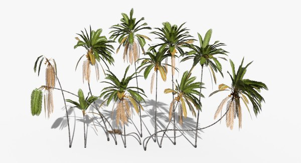 3D cocos coconut palm tree tropical