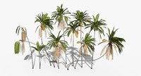 Coconut Palm Trees Asset 2